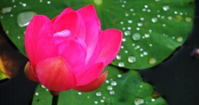 3. Dipankarabuddhavamso