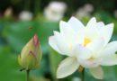 Tam Bảo - Những Ngày Tháng Cuối Cùng Của Đức-Phật & 37 Pháp Chứng Đắc Thánh-Đạo